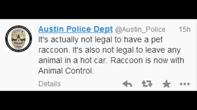 Austin police rescue raccoon from hot car