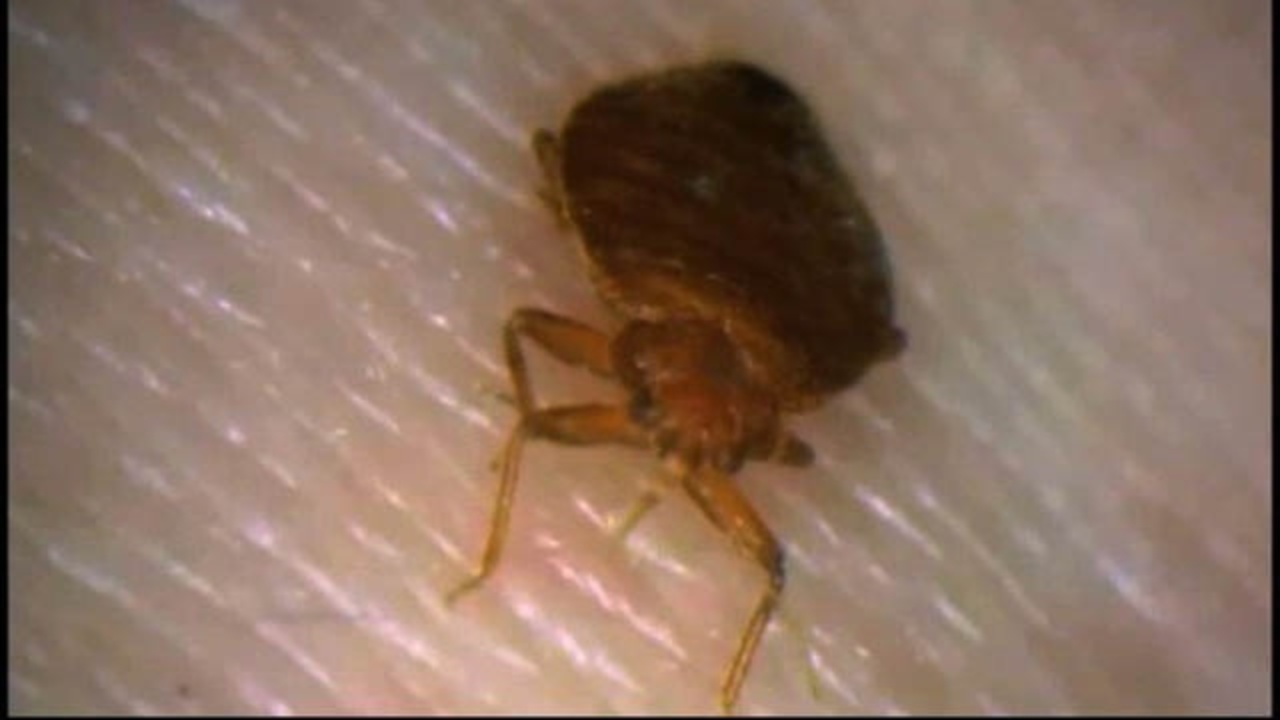 Bed Bugs Houston Apartment