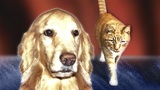 Veterinarian recommends pet rehab for older animals