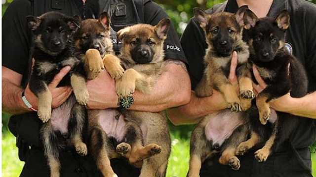 Cute K9's... for now!