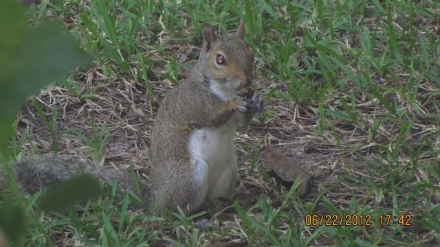 Squirrel Watch, Amber Eyes 09-06-12