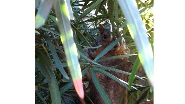 Squirrel Watch, Hiding
