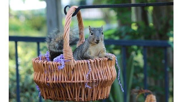 Squirrel Watch, In Basket 04-01-13