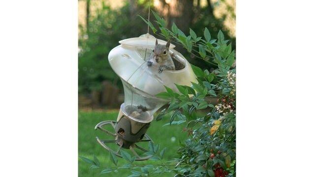 Squirrel Watch, In Birdfeeder 07-30-12