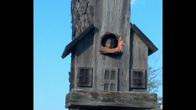 Squirrel's new home