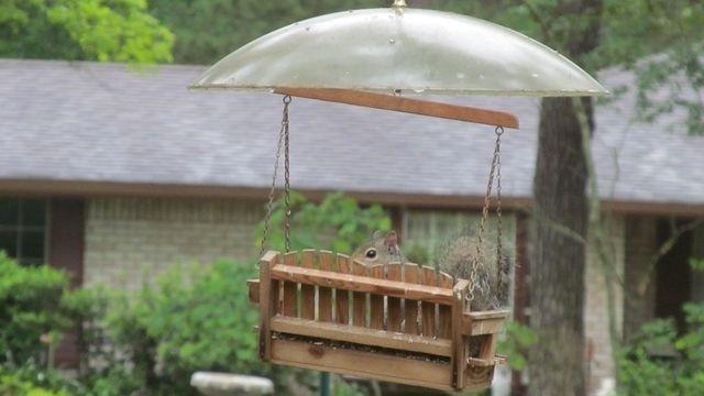 Squirrel Watch, Watching Squirrel 07-30-12