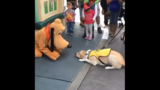 VIRAL VIDEO: Guide dog meets Pluto at Disneyland in magical moment