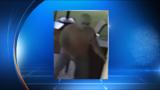 Thief breaks down door, robs homeowner at gunpoint