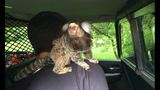Washington police arrest driver with monkey on his back