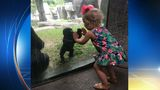Fort Worth Zoo baby gorilla and girl share cute moment