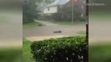 Severe weather hits Houston area