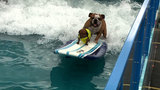Surfing dog auditions being held in Houston