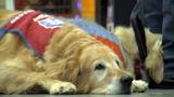 Lowes hires disabled vet, service dog
