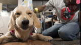VIDEO: Texas Children's Hospital holds birthday bash for therapy dog