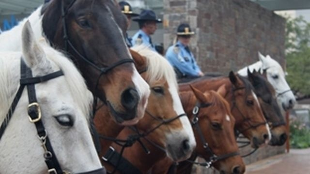 4 things to know about the Houston Police Mounted Patrol Unit
