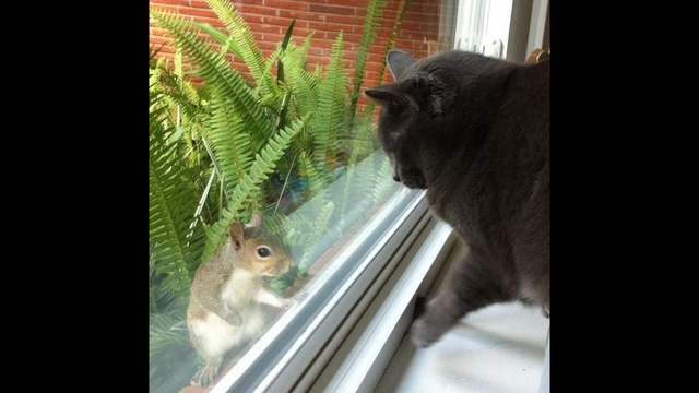 Cat & Squirrel_23210078