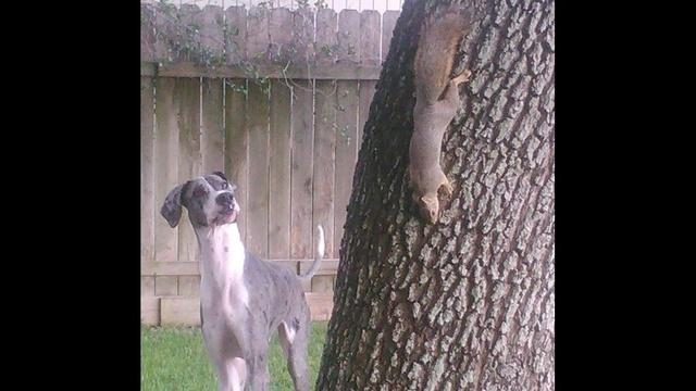 Squirrel Watch Dog