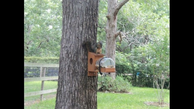 Fat Squirrel_23210234