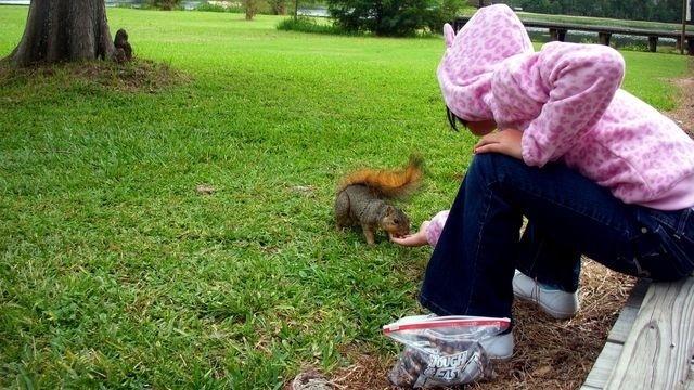 Squirrel Watch, Feeding Squirrel 03-01-13