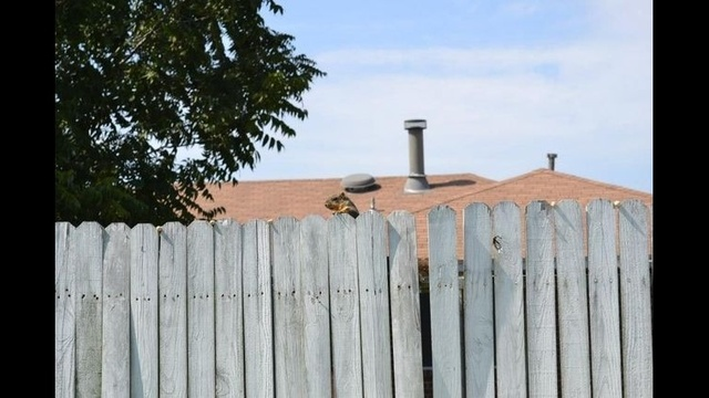 Squirrel on a fence_23210074