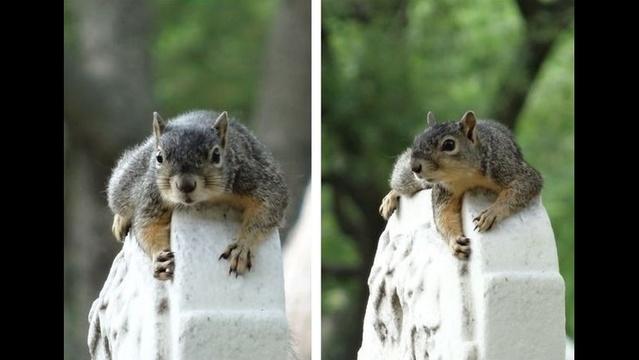 Split Screen Squirrel