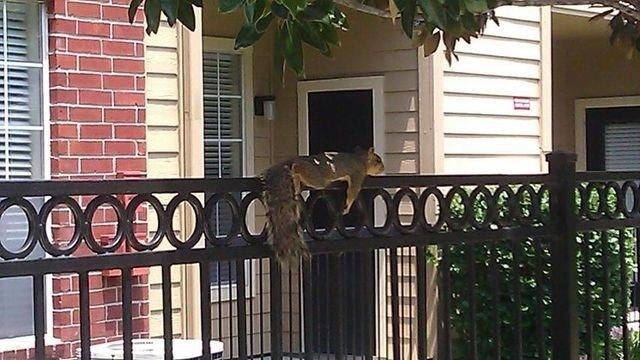 Hot Squirrel_21260012