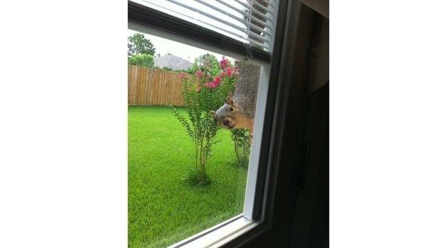 Squirrel Watch, Peeping 03-01-13