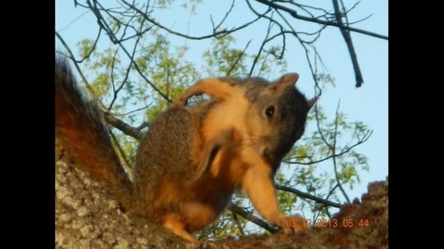 Scratching Squirrel_21259824