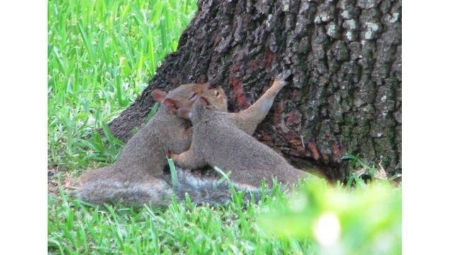 Squirrel Watch, Snuggling_17226474