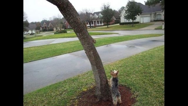 Squirrel Stand Off