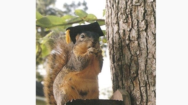 Squirrel Watch, Wearing Graduation Cap 05-31-12_14412096
