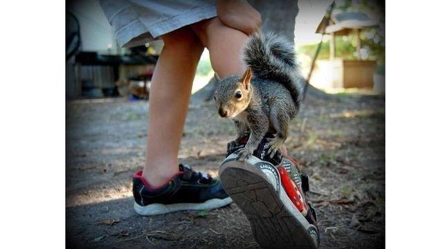 Squirrel watch, baby squirrel 01-31-13_18354118