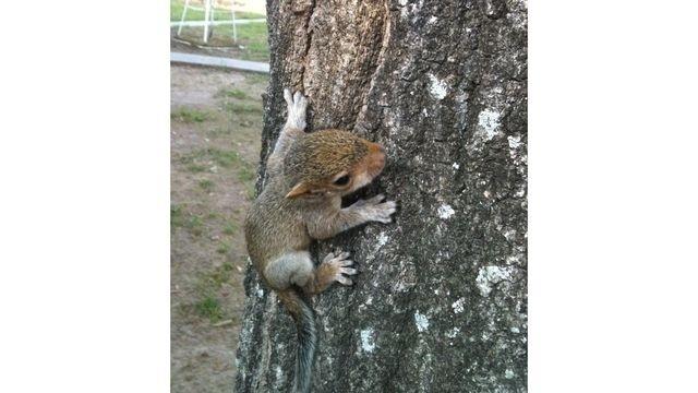 Squirrel watch, baby squirrel 2 01-31-13_18354158