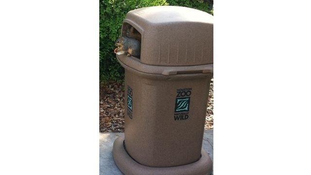 Squirrel watch, on trashcan 01-31-13_18354230