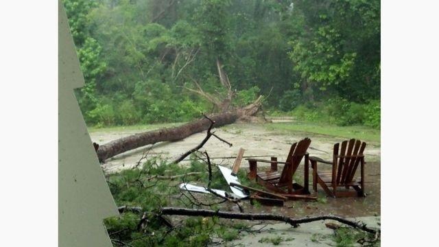 Woodlands Tree Down_14801206