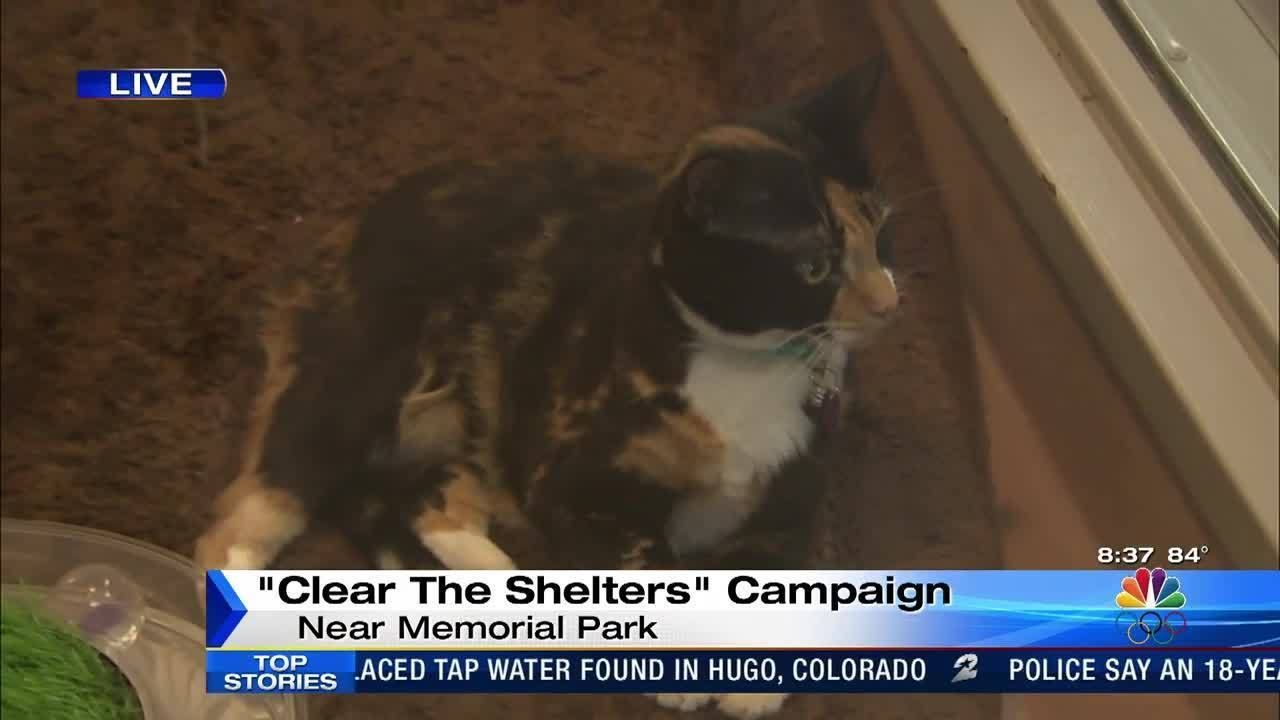 Clear The Shelters campaign today