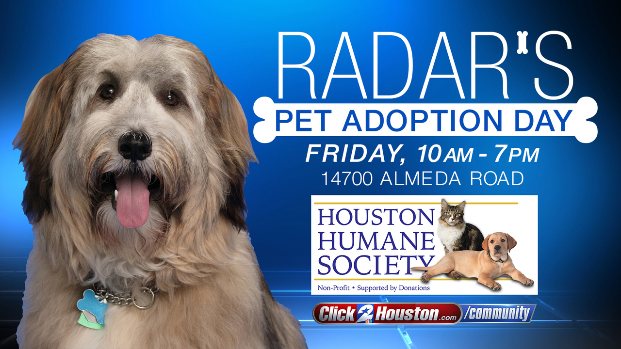 Radar The Dog S Pet Adoption Day In Houston