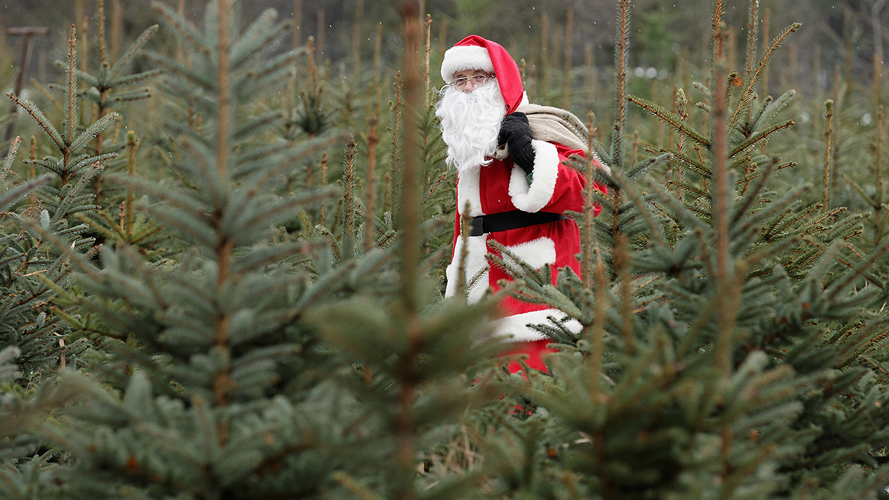 Christmas Trees In Houston Where To Cut Your Own Or Fresh