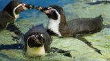 Humboldt Penguins Interview