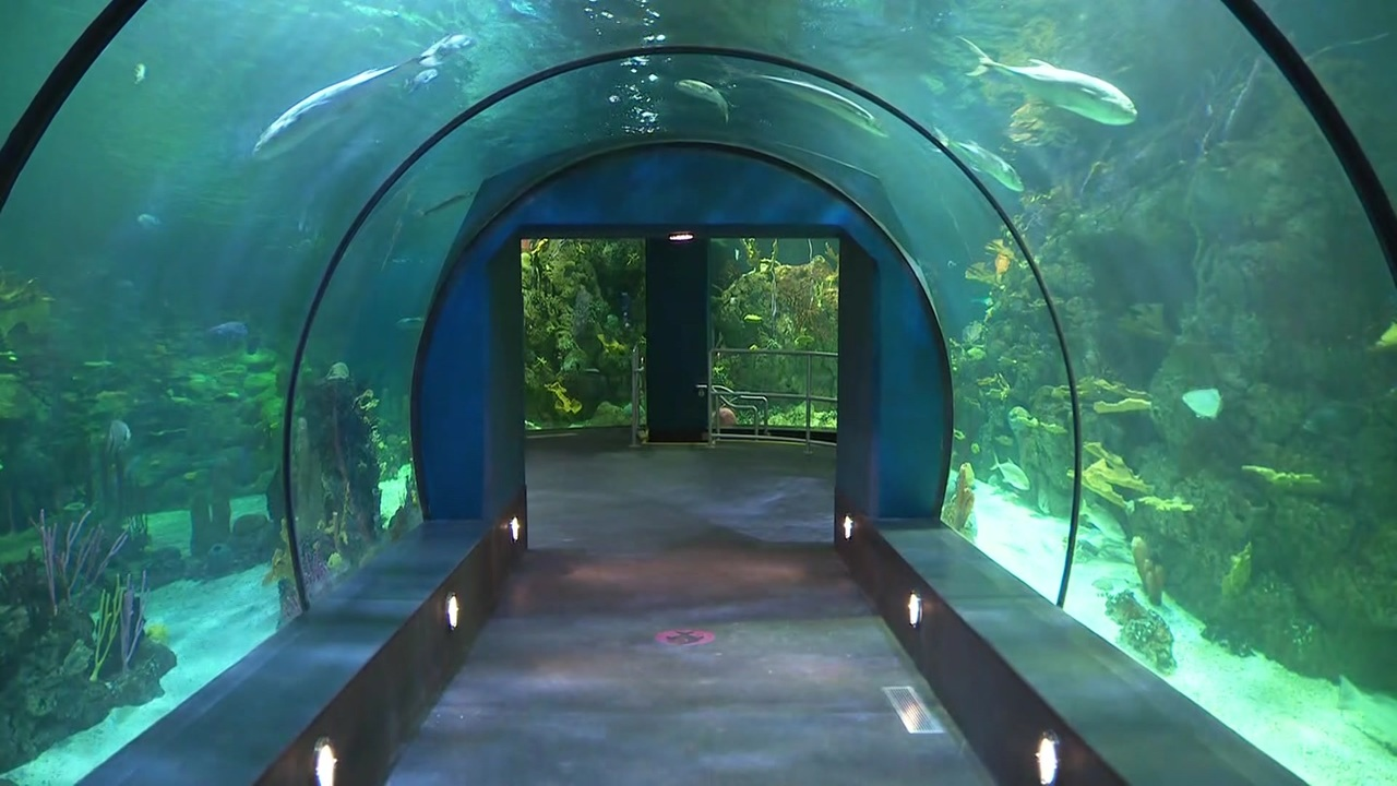 After 2 Years Of Renovations, New Moody Gardens Aquarium Set.