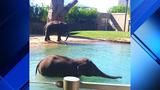 Houston Zoo unveils expanded elephant yard