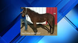 Horse missing, believed stolen