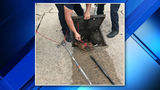 Dog rescued after getting stuck in drain of apartment parking lot