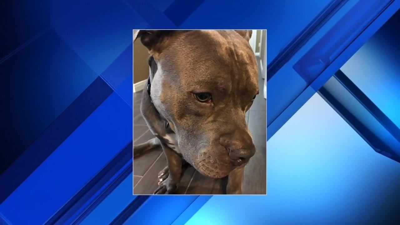 Missouri City family wants answers after dog shot, killed ...