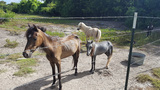 Dozens of miniature horses rescued from property in Baytown