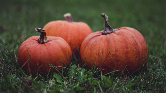 Map shows where to find pumpkin patch fun across Houston area