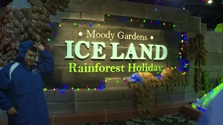 Go Inside Moody Gardens 39 Holiday Display Rainforest Holiday