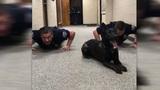 Nitro the police dog creates viral workout video