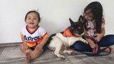 Astros player Marwin Gonzalez's lost dog found in Montrose