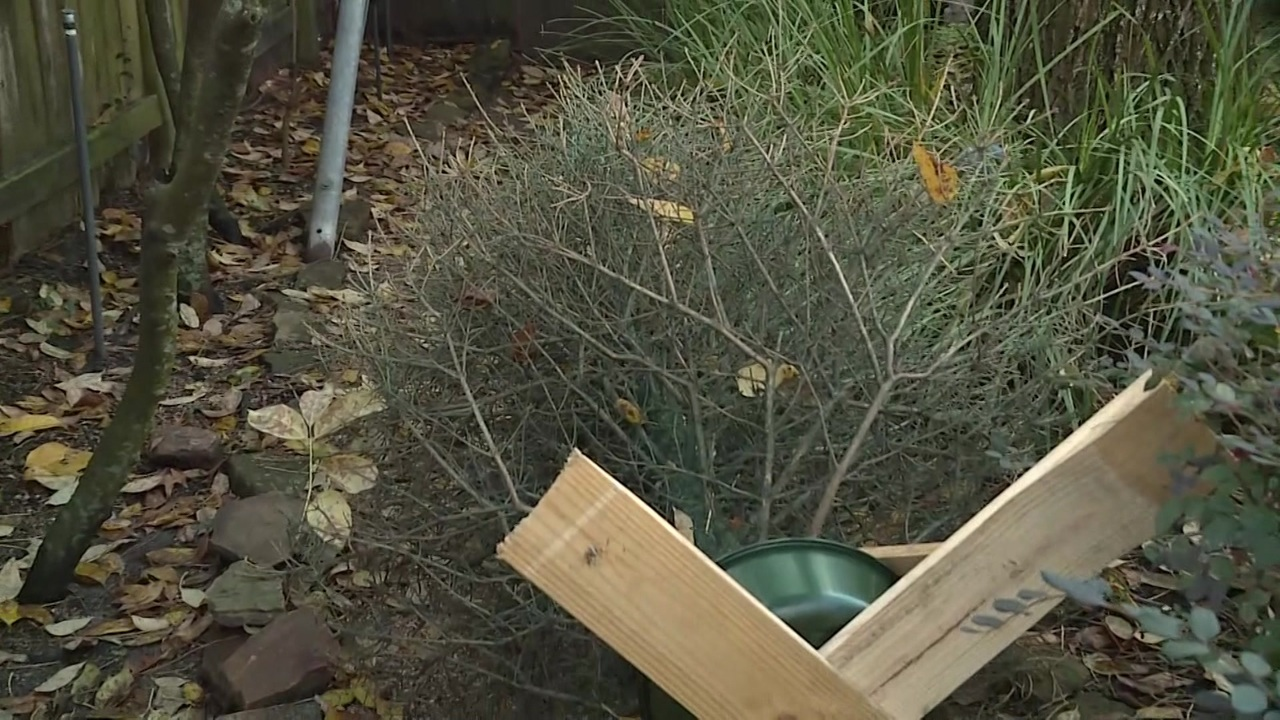 Customers Say Christmas Trees From Houston Garden Center